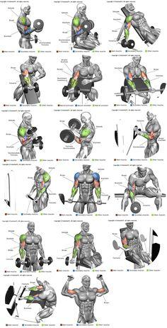 Biceps e Braquial