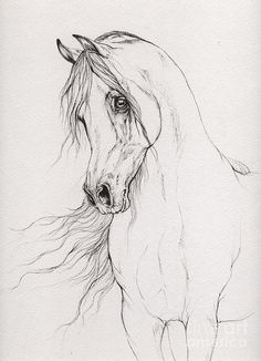 Arabian Horse Drawing 2015 12 03 Drawing