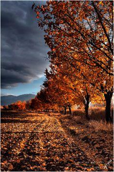 Autumn.... by Emrah Karakoç on 500px.