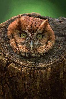 "Owl: ""Eye-Popping!"""