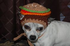 Hamburger Dog hat - Do I see a bit of regret in his face?
