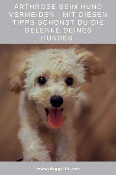 Gelenkprobleme vorbeugen beim Hund betrifft dich nicht? Irrtum! Die meisten Hunde leiden im Verlauf ihres Lebens unter Gelenkproblemen. Es gibt einige Dinge, mit denen du die Entstehung von Gelenkerkrankungen beim Hund aktiv vorbeugen kannst. Wir haben dir einige hilfreiche Punkte zusammengefasst.älterer Hund | alter Hund |Arthrose| Bewegung Hund | Hundefitness | Gelenkprobleme Hund | Gelenkprobleme Hund vorbeugen | Bewegungstraining | Hund Schmerzen | Seniorhund | Spondylose