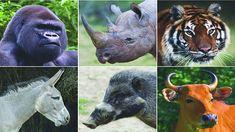 Um grupo de cientistas alerta  a Terra está prestes a perder seus maiores mamíferos