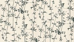 Dragonfly (2W-DRAGN-CR/B) - Clarissa Hulse Wallpapers - A delightful unique wallcovering with fine delicate dragonflies on twig like stems. Shown in the bold black on cream. Other colour ways available. Please request a sample for true colour match.