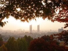 Her Beautiful Adventure - Beautiful Daejeon South Korea, Autumn time. Lets Run Away, South Korea Travel, Daejeon, Kimchi, Cool Places To Visit, The Good Place, Seoul, Beautiful Places, National Parks