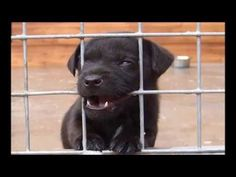 Dog Obedience Training - Crate Training A Puppy