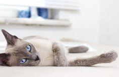Passivrauchen: Für Katzen besonders schädlich