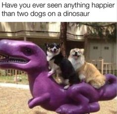 Funny Animal Pictures Of The Day – 45 Pics. Have you ever seen anything happier than two dogs on a dinosaur? Enjoy RUSHWORLD boards, LULU'S FUNHOUSE, UNPREDICTABLE WOMEN HAUTE COUTURE and IN YOUR FACE GUERILLA MARKETING. Follow RUSHWORLD! We're on the hunt for everything you'll love!