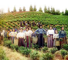 The Final Years of Pre-Soviet Russia, Captured in Glorious Color | Group of Greek workers harvesting tea.   | WIRED.com