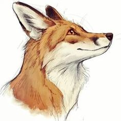 Drawing Tips fox drawing Animal Sketches, Animal Drawings, Drawing Sketches, Art Drawings, Drawing Drawing, Drawing Tips, Cute Fox Drawing, Drawing Animals, Art Fox