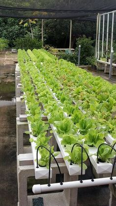 HYDROPONICS Systems Builder