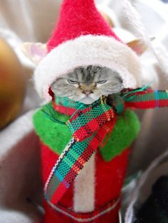George the Elf  For more fun holiday cats, visit https://www.facebook.com/funholidaycats