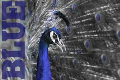 While being off sick over the past week and feeling a little blue, I spent a bit of time playing in Lightroom. Robert Wood, Wildlife Photography, Lightroom, The Past, Bird, Animals, Animales, Animaux, Birds