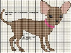 Chihuahua click on photo for chart. Looks like my Jlo.