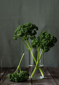 Fresh curly parsley in a glass of water by Renáta Dobránska