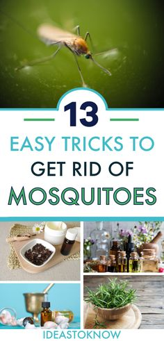 Mosquito Repellent Oils, Mosquito Trap, Natural Mosquito Repellant, Insect Repellent, Diy Pest Control, Bug Control, Swing Table, Keeping Mosquitos Away, Bug Off