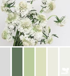 Flora Tones - https://www.design-seeds.com/in-nature/flora/flora-tones-16