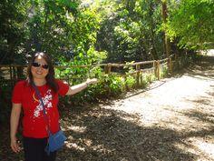 Parque Alfredo Volpi Em Foco