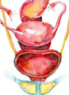 Female Pelvic Anatomy Watercolor Print Rectum Uterus by LyonRoad