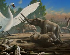 pleistocene animals | Identifying Pleistocene animals from Malta, courtesy of paleocreations ...
