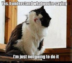 Highly Skilled Felines - LOLcats is the best place to find and submit funny cat memes and other silly cat materials to share with the world. We find the funny cats that make you LOL so that you don't have to. Funny Animal Memes, Cute Funny Animals, Cute Cats, Funny Cats, Funny Memes, Funny Horses, Memes Humor, Silly Cats, Tier Fotos