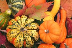 autumn-gourds.jpg (849×565)