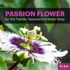 Passion flower - Dr. Axe http://www.draxe.com #health #holistic #natural