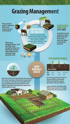 Learn the importance of grazing and how to manage grazing on your property through Zareba's educational infographic. Learn the importance of grazing and how to manage grazing on your property through Zareba's educational infographic. Cattle Farming, Goat Farming, Livestock, Horse Farm Layout, Homestead Farm, Homestead Layout, Homestead Gardens, Raising Farm Animals, Horse Barn Plans