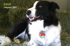 Sage adopted 2007!