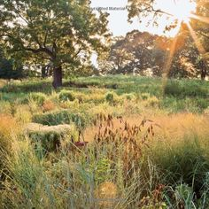 The American Meadow Garden: Creating a Natural Alternative to the Traditional Lawn: John Greenlee, Saxon Holt: 9780881928716: Amazon.com: Books