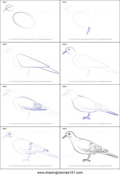 How to Draw a White-Winged Dove Printable Drawing Sheet by DrawingTutorials101.com