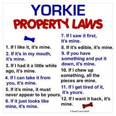Yorkie Property Laws Poster
