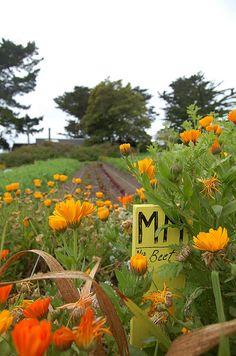 Orange + Green   Esalen... Big Sur, via Flickr.