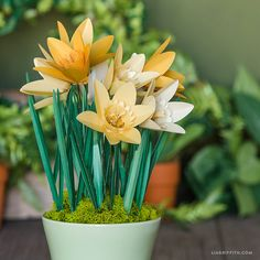 Inspiring Bulbs that Signal Spring *This post is a part of our Countdown to Spring Giveaway. Scroll to the bottom of the post for details on how you canwin a trip to visit us in Portland! If we could only choose one flower to include in our Countdown to Spring, it would be daffodils. They...