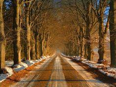 Estradas Bonitas :: Galeria de Fotos - Chongas