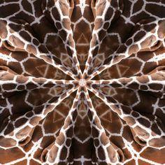 Image detail for -Kaleidoscope Kreator 3.0