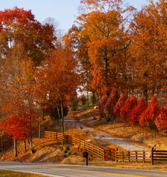 my husband always says how georgia has real!!! fall and winter!! this is beauiful!