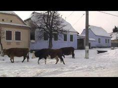 Prince Charles of Wales has a House in Viscri,Transylvania,Romania (HD).m2ts