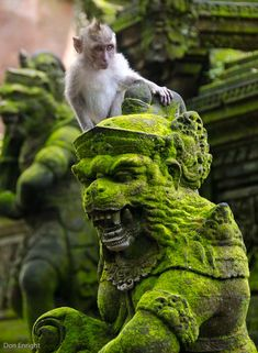 moss-covered sculpture and the Cheeky Monkey - Bali Art Sculpture, Mundo Animal, Amazing Nature, Rock Art, Travel Photography, Photography Music, Concept Art, Scenery, Creatures