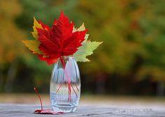colorful autumn .. X ღɱɧღ ||