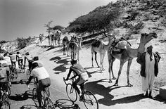 Cyclists pass a Bedouin camel caravan, on the road between Barentu and Keren in central Eritrea, 26 November World Press Photo, Sports, prize stories. 26 November, World Press, Press Photo, Present Day, African Art, Camel, Scene, Racing, Tours
