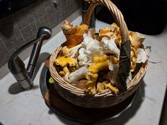 October 21 evening foray in the Gifford Pinchot forest yields a basket-full of Angel Wings, Golden Chanterelles, Lobsters, and Zeller's Boletes. Wild Mushrooms, Stuffed Mushrooms, Gifford Pinchot, Lobsters, Angel Wings, October, Basket, Hummer, Stuff Mushrooms