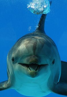 "A Delightful Dolphin ~ Who Just Wants To Say: ""Hello!"""
