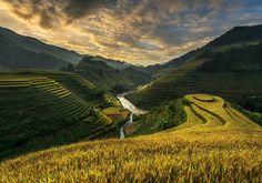 Golden rice terrace by sarawut Intarob on 500px