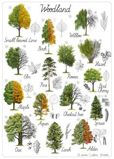 Montessori Educational art Woodland Home Decor Digital Printable Insta… Horticulture, Landscape Design, Garden Design, Leaf Identification, Popular Tree, Tree Leaves, Tree Tree, Oak Leaves, Detailed Drawings