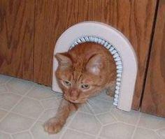 10 Truly Amazing Cat Doors And Entryways | Petslady.com #catsdiyclimbing