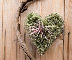 driftwood wire heart air plant display ideas hanging garden