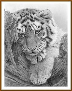 Terry  Jackson  tiger 1