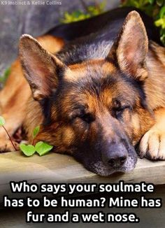 My soulmate is furry <3