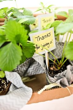 herbs as party favors